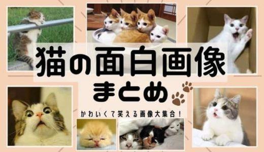 猫の面白画像60選!笑える猫の画像を探している方必見!