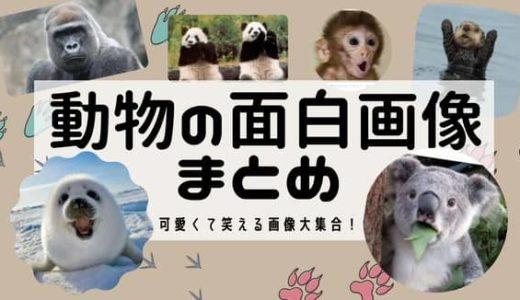 動物の面白画像110選まとめ!
