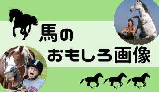 馬のおもしろ画像50選!笑える画像を厳選して紹介!