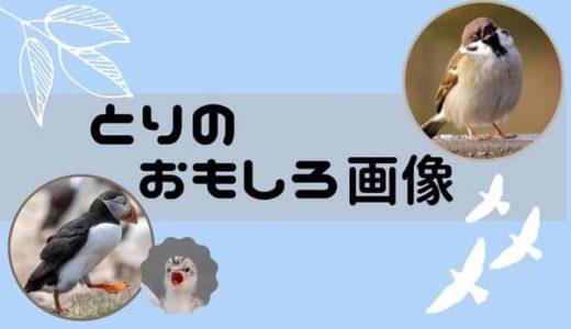 鳥のおもしろ画像40選まとめ!厳選して紹介!